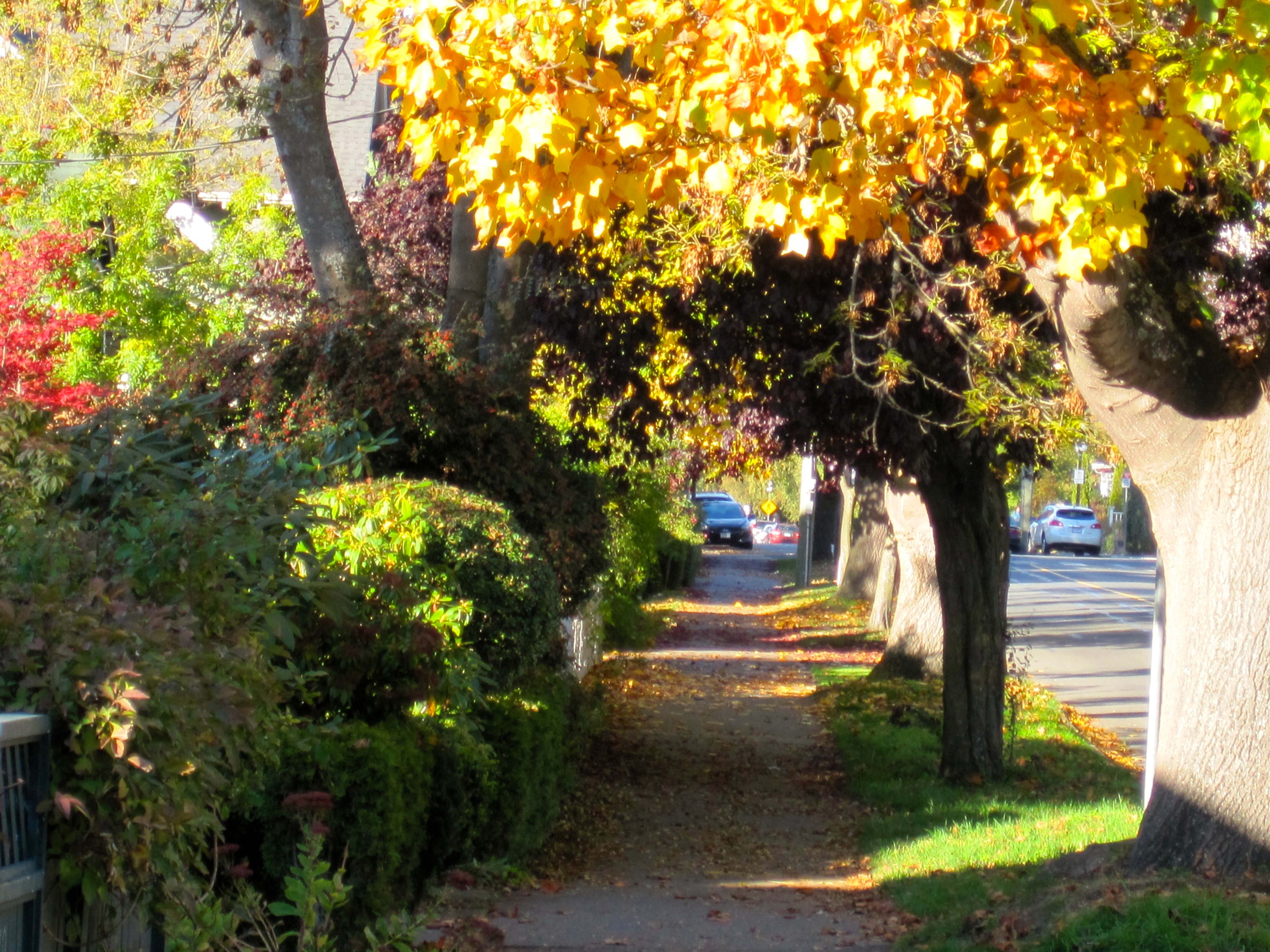 Picture of tree lined street in Oak Bay Village, Victoria, BC